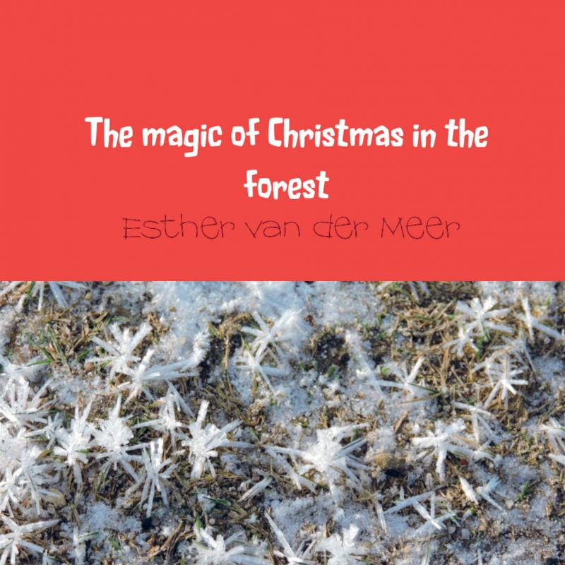 The magic of Christmas in the forest