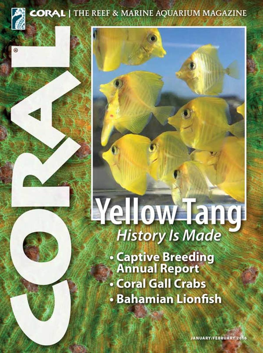Coral magazine: Yellow Tang