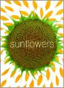 Sunflower Small Note Cards