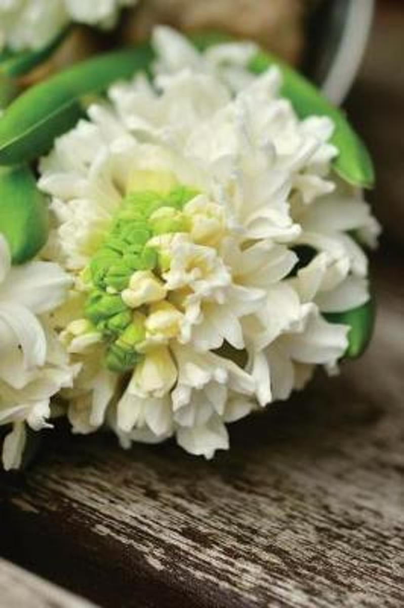 Romantic White Hyacinth Flowers on a Rustic Bench in the Garden Journal