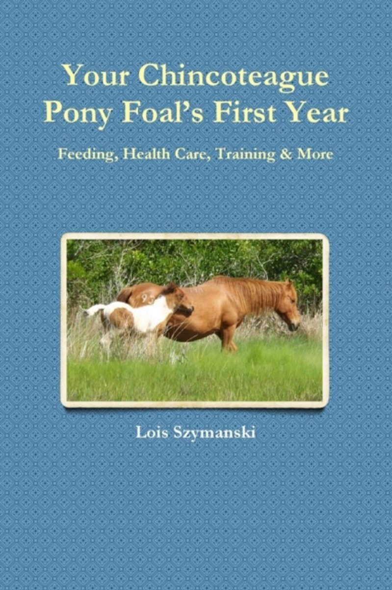 Your Chincoteague Pony Foal's First Year