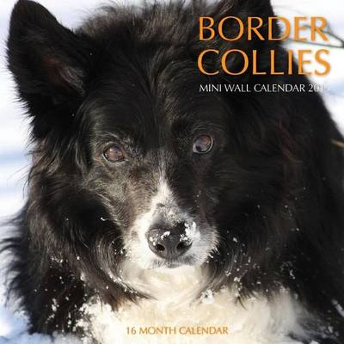 Border Collies Calendar 2015