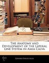 The Anatomy And Development Of The Lateral Line System In Amia Calva
