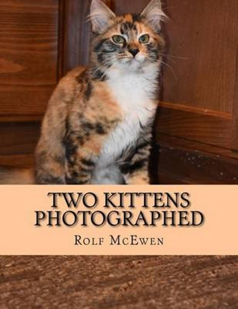 Two Kittens Photographed