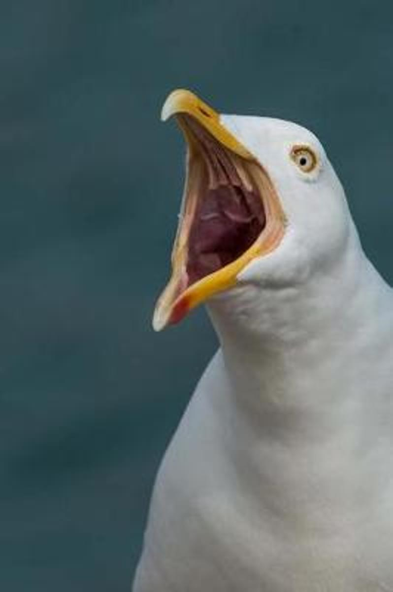 Shocked Seagull Saw What You Did Bird Journal
