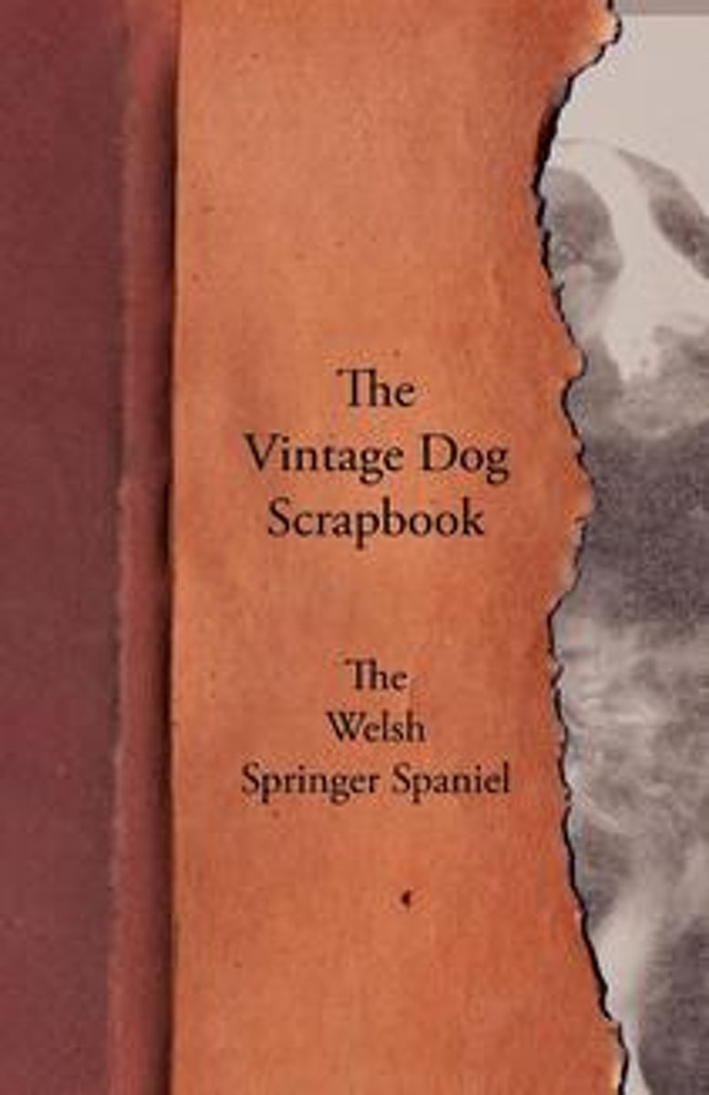 The Vintage Dog Scrapbook - The Welsh Springer Spaniel