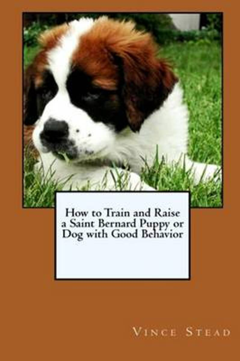 How to Train and Raise a Saint Bernard Puppy or Dog with Good Behavior