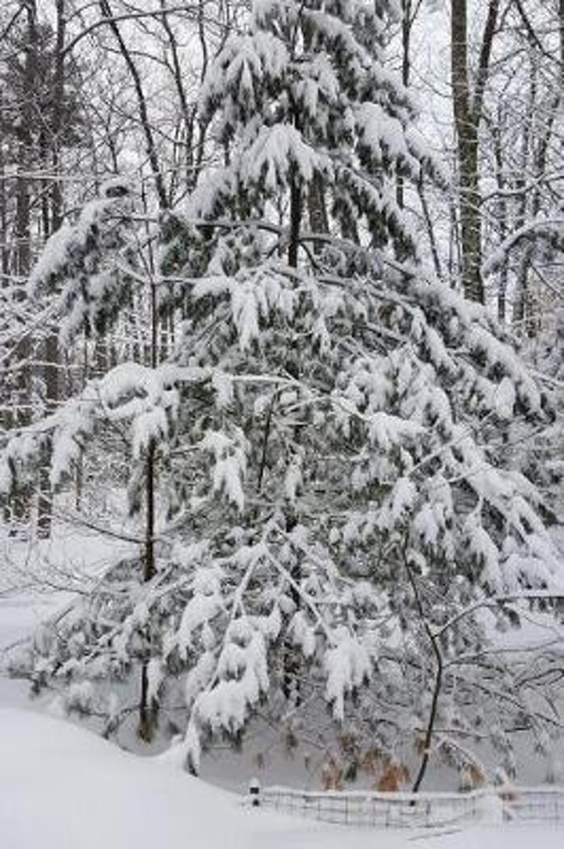 Woods After Snowstorm Winter Weather Journal