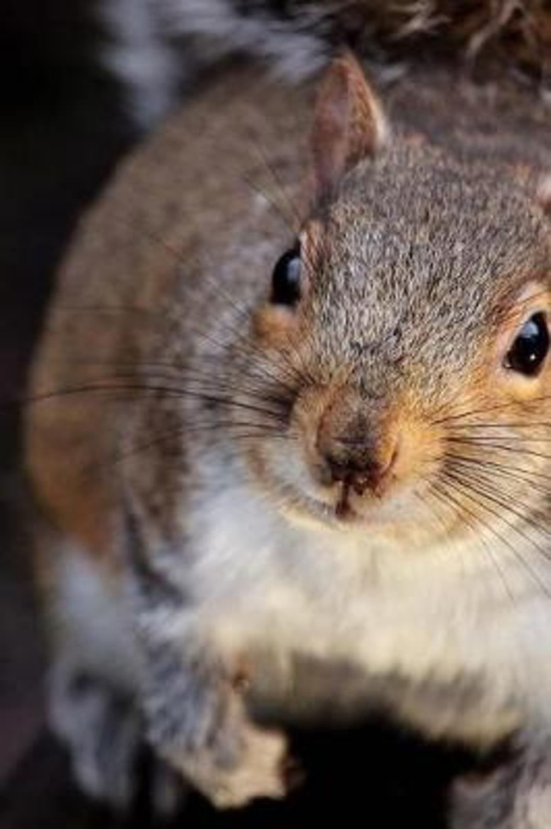 Inquisitive Squirrel Checking You Out Journal