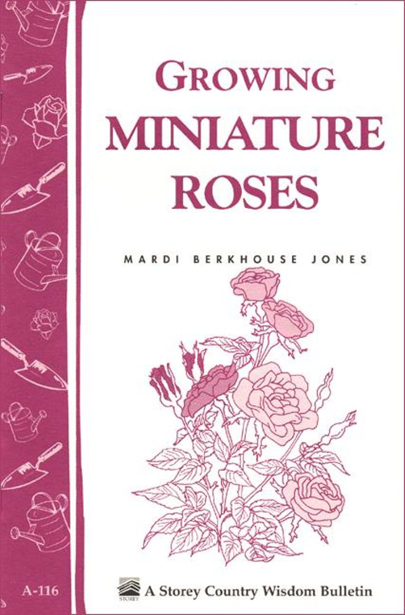 Growing Miniature Roses