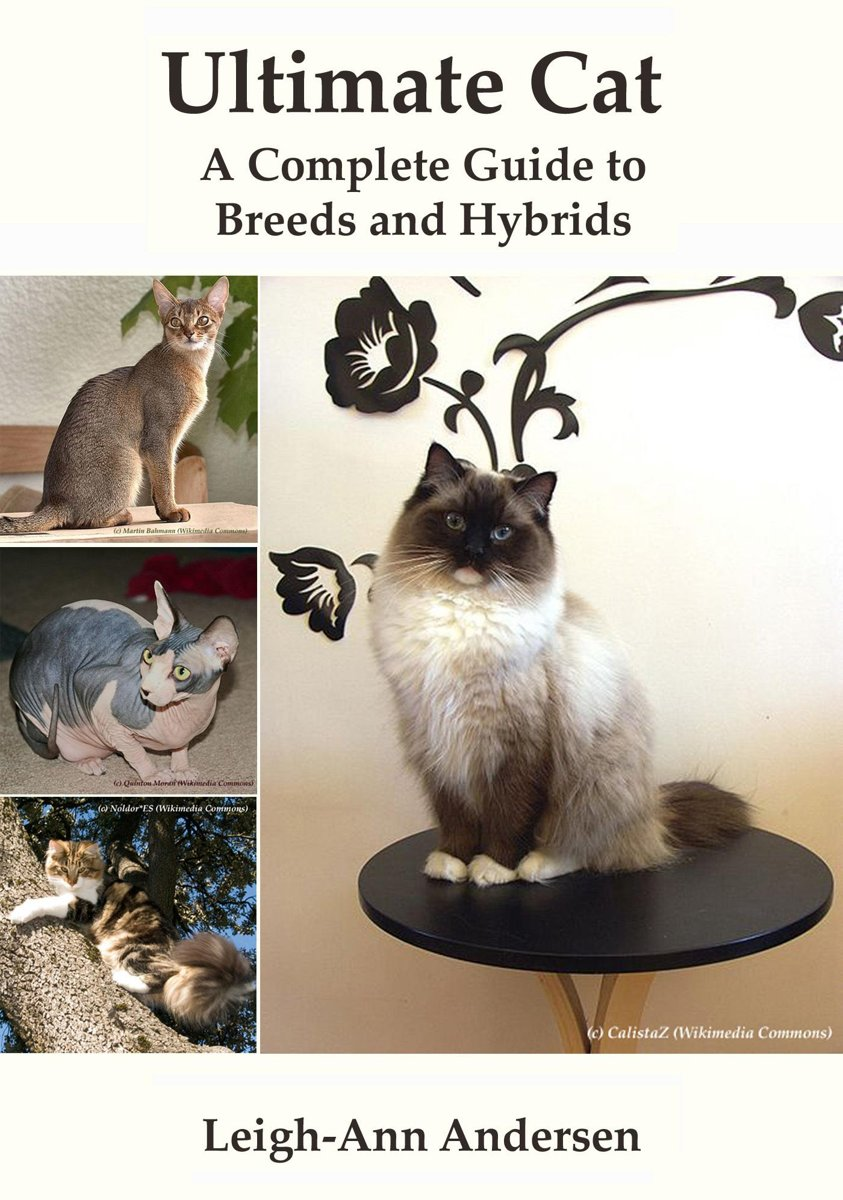 Ultimate Cat: A Complete Guide to Breeds and Hybrids