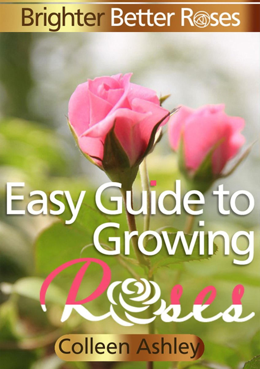 Easy Guide to Growing Roses
