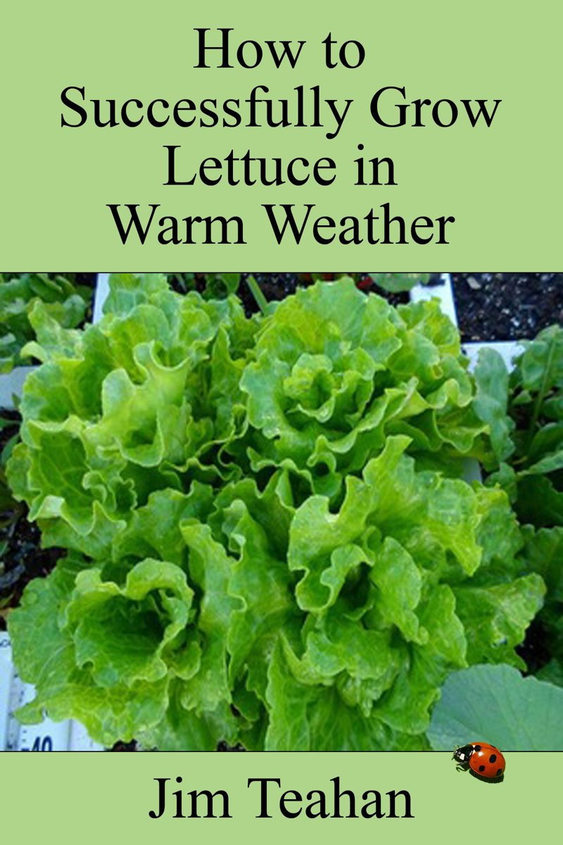 How to Successfully Grow Lettuce in Warm Weather
