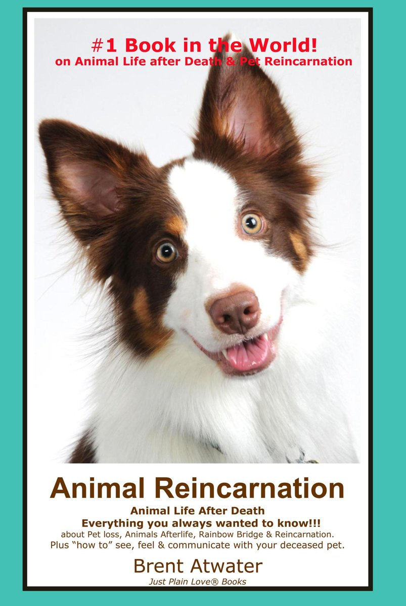 Animal Reincarnation: Everything You Always Wanted to Know! About Pet Reincarnation