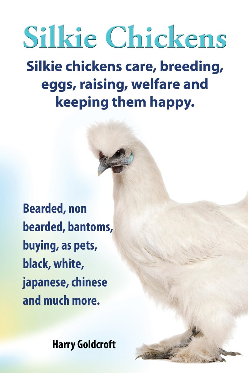 . Silkie Chickens. Silkie Chickens Care, Breeding,Eggs,Raising, Welfare And Keeping Them Happy.