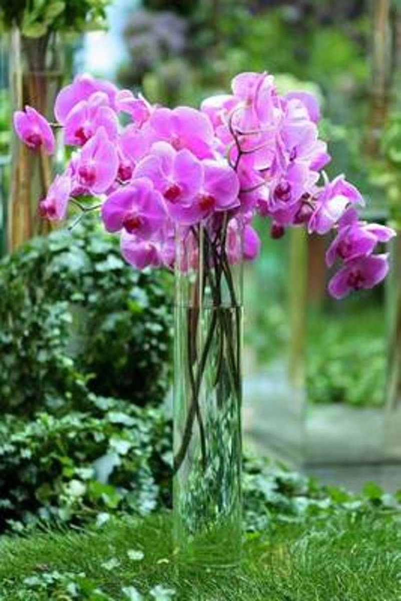 Purple Orchids in a Vase Journal