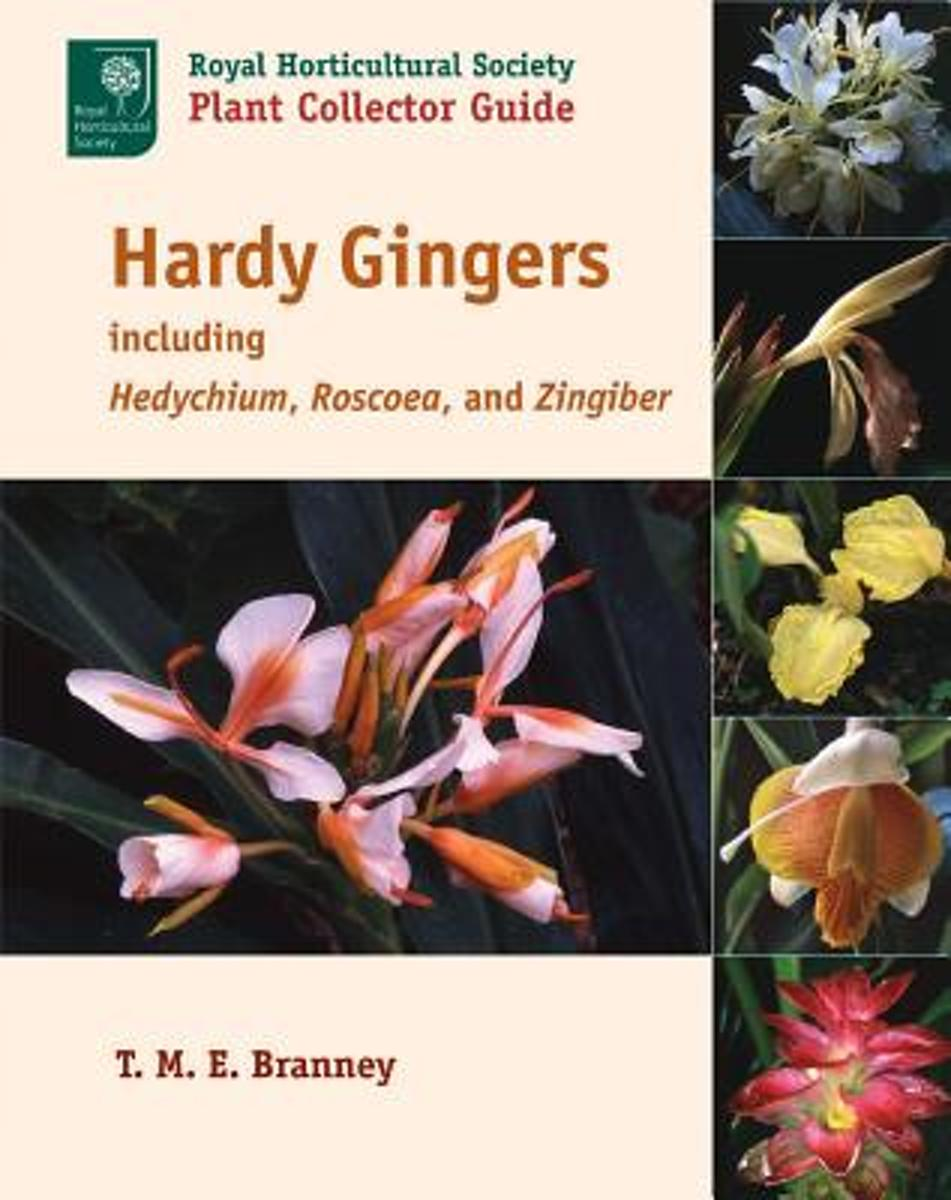 Hardy Gingers, Including Hedychium, Roscoea, and Zingiber