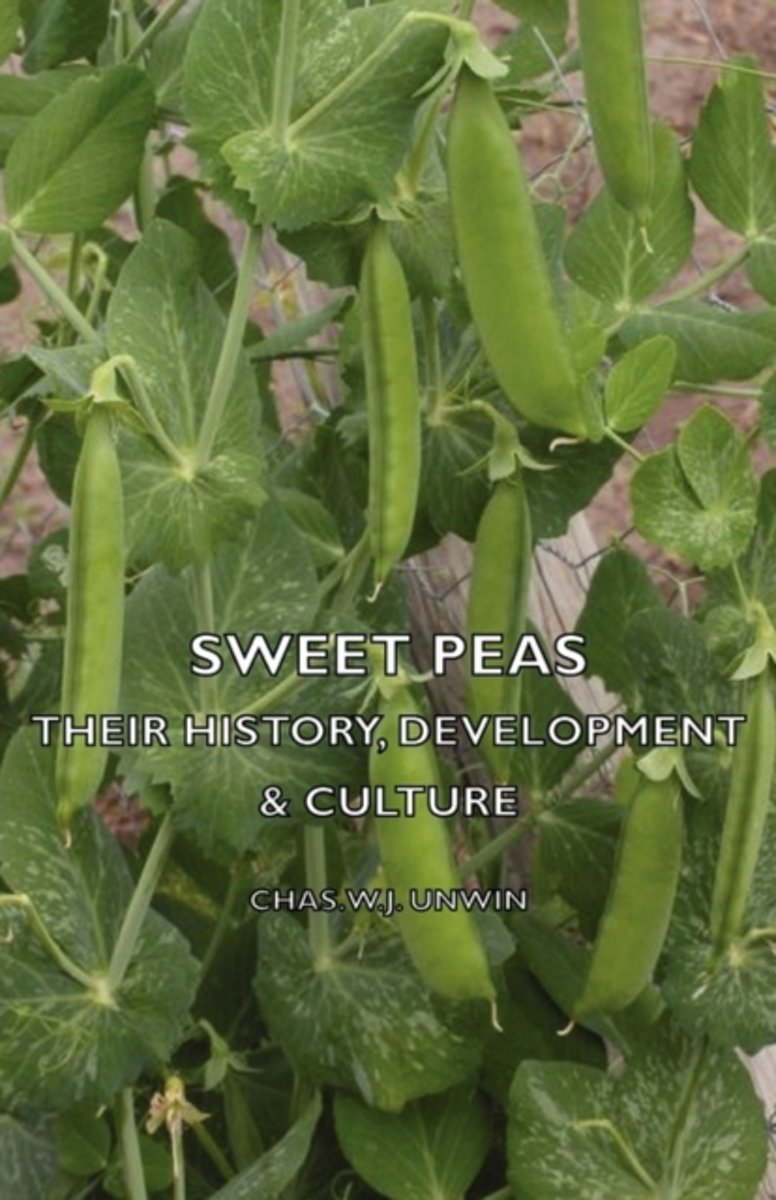 Sweet Peas - Their History, Development & Culture