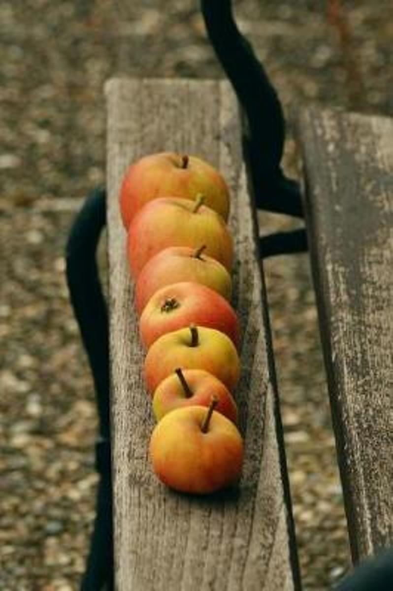 Organic Red Windfall Apples on a Garden Bench Harvest Journal