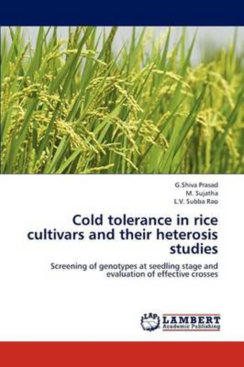 Cold Tolerance in Rice Cultivars and Their Heterosis Studies