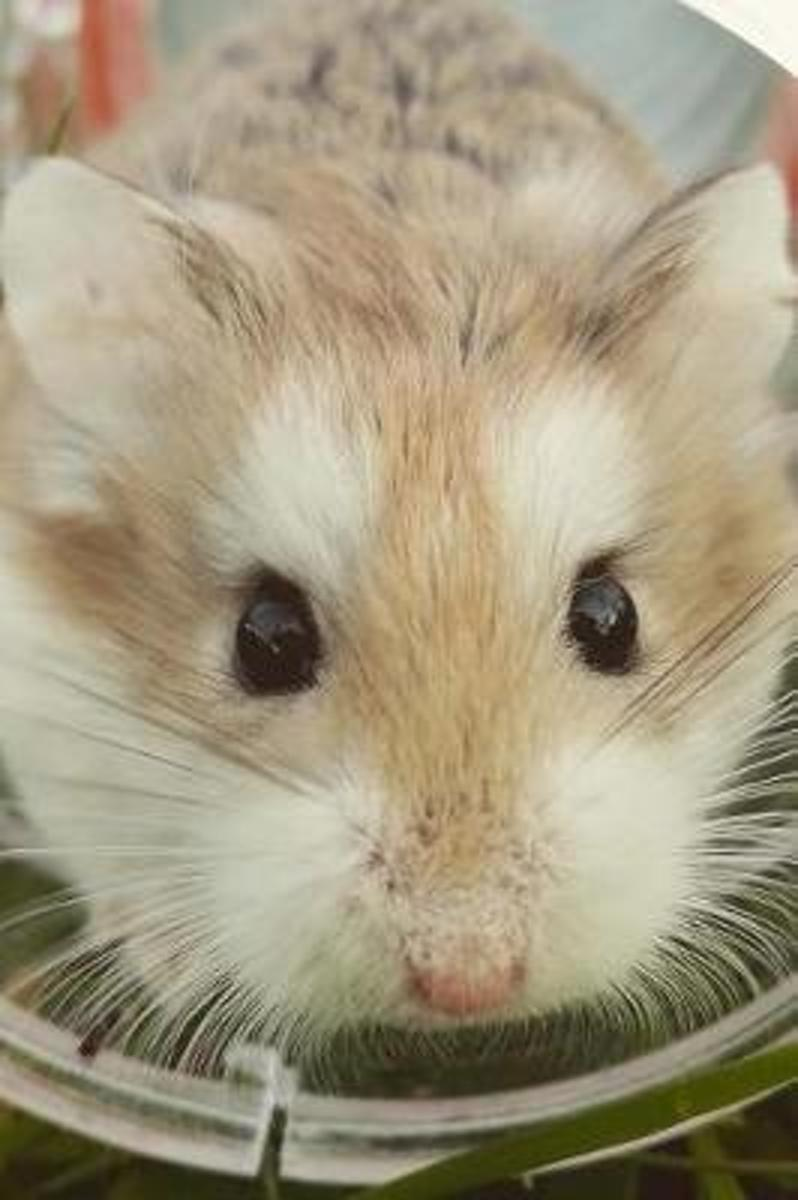 What a Face! Cute Hamster Pet Journal