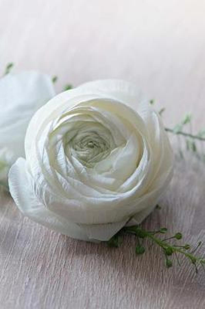 Lovely Creamy White Ranunculus Flower Journal
