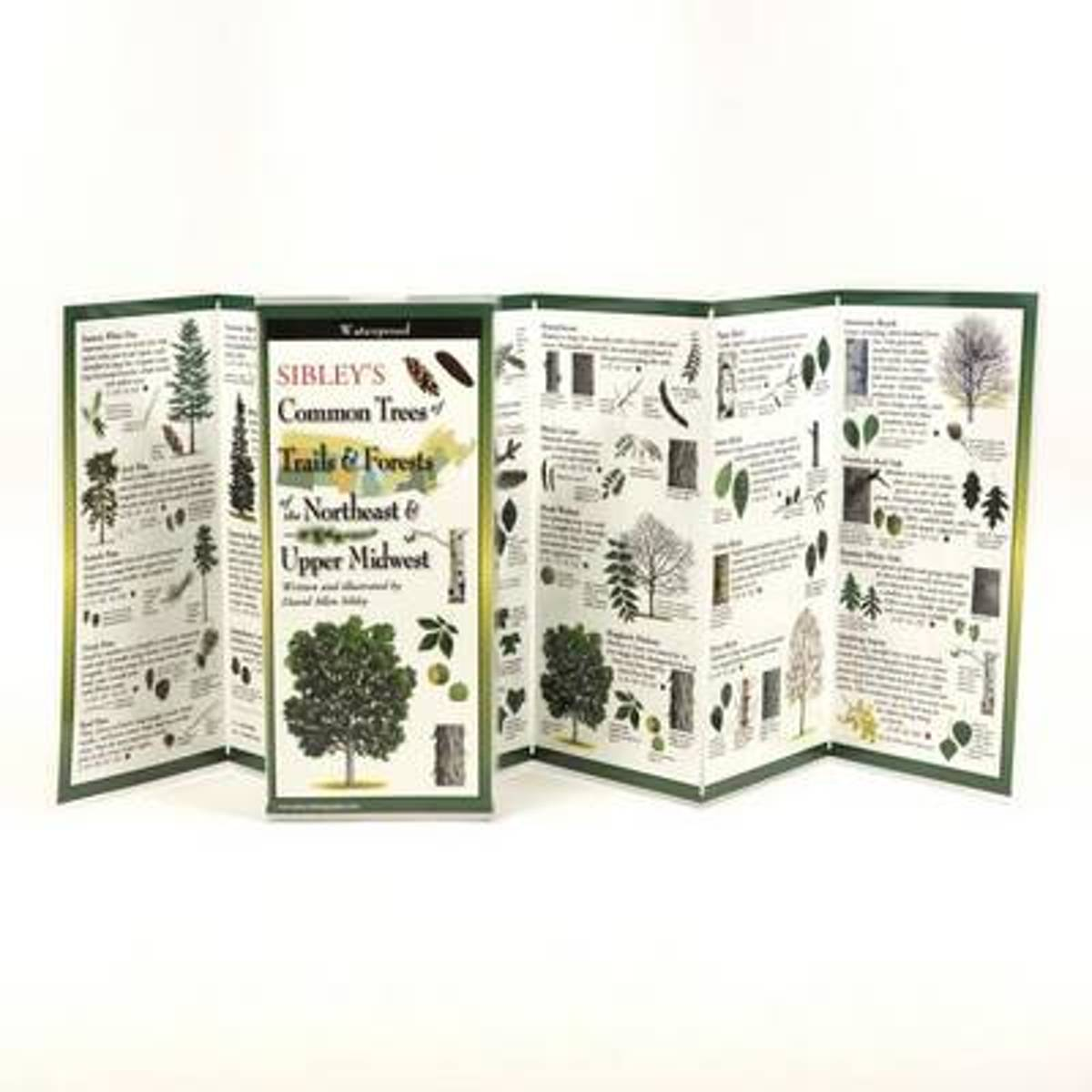 Sibley's Trees of Trails and Forests of the Northeast & Upper Midwest