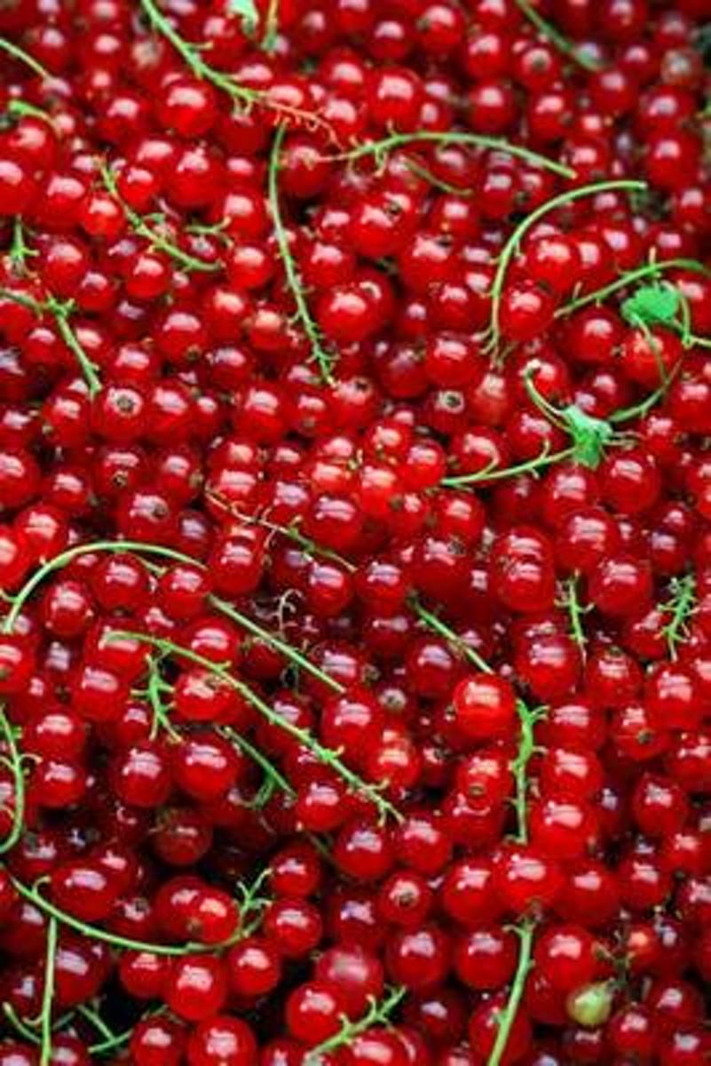 The Red Currants Journal