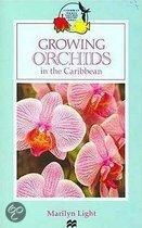 Growing Orchids In The Caribbean