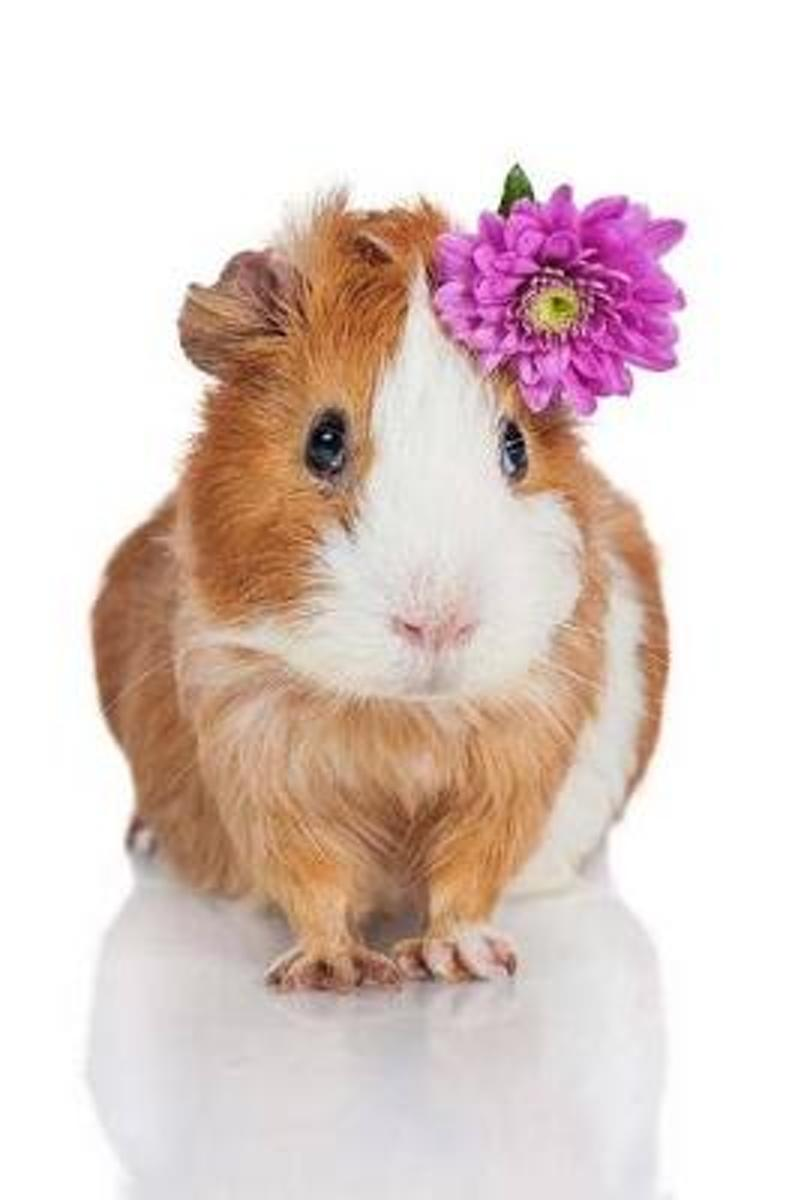 Pretty Sweet Guinea Pig with a Pink Flower Journal