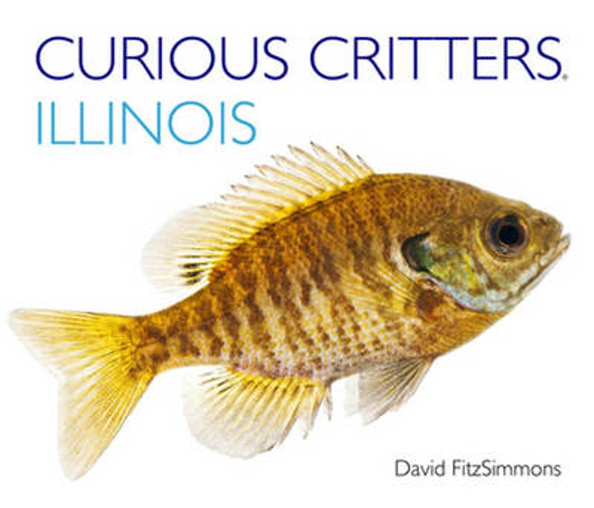 Curious Critters Illinois
