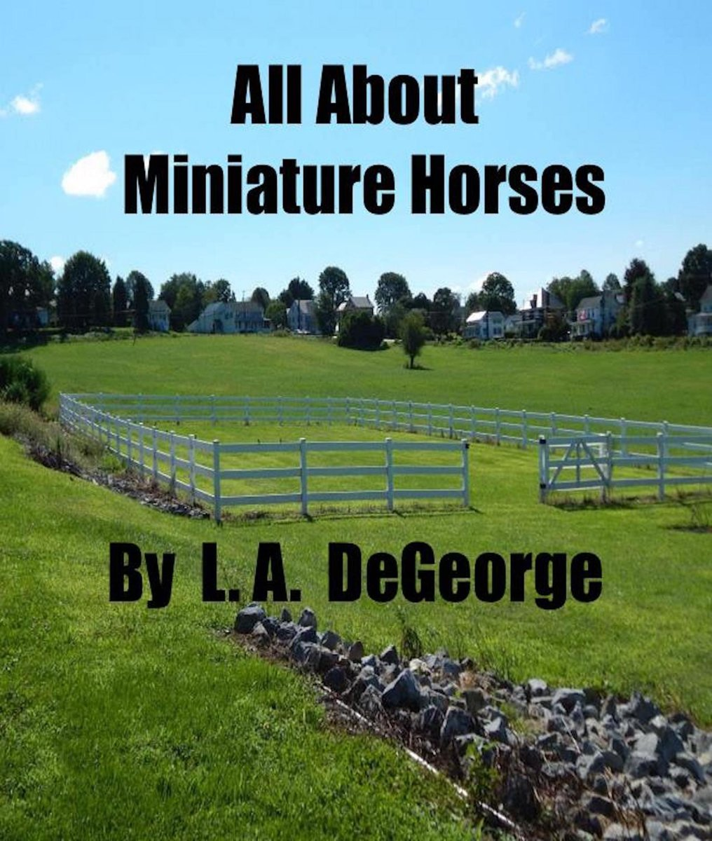 All About Miniature Horses