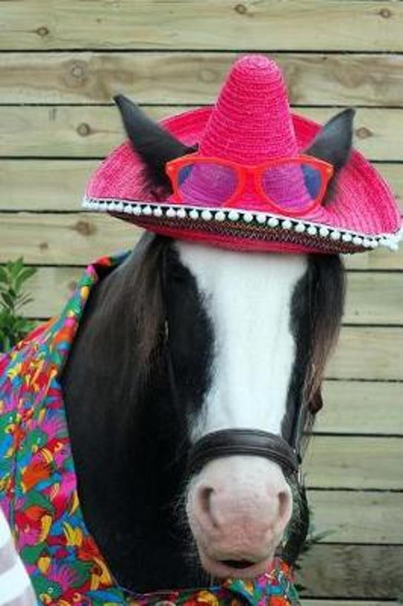 A Charming Horse in a Cute Pink Hat Says Hello Journal
