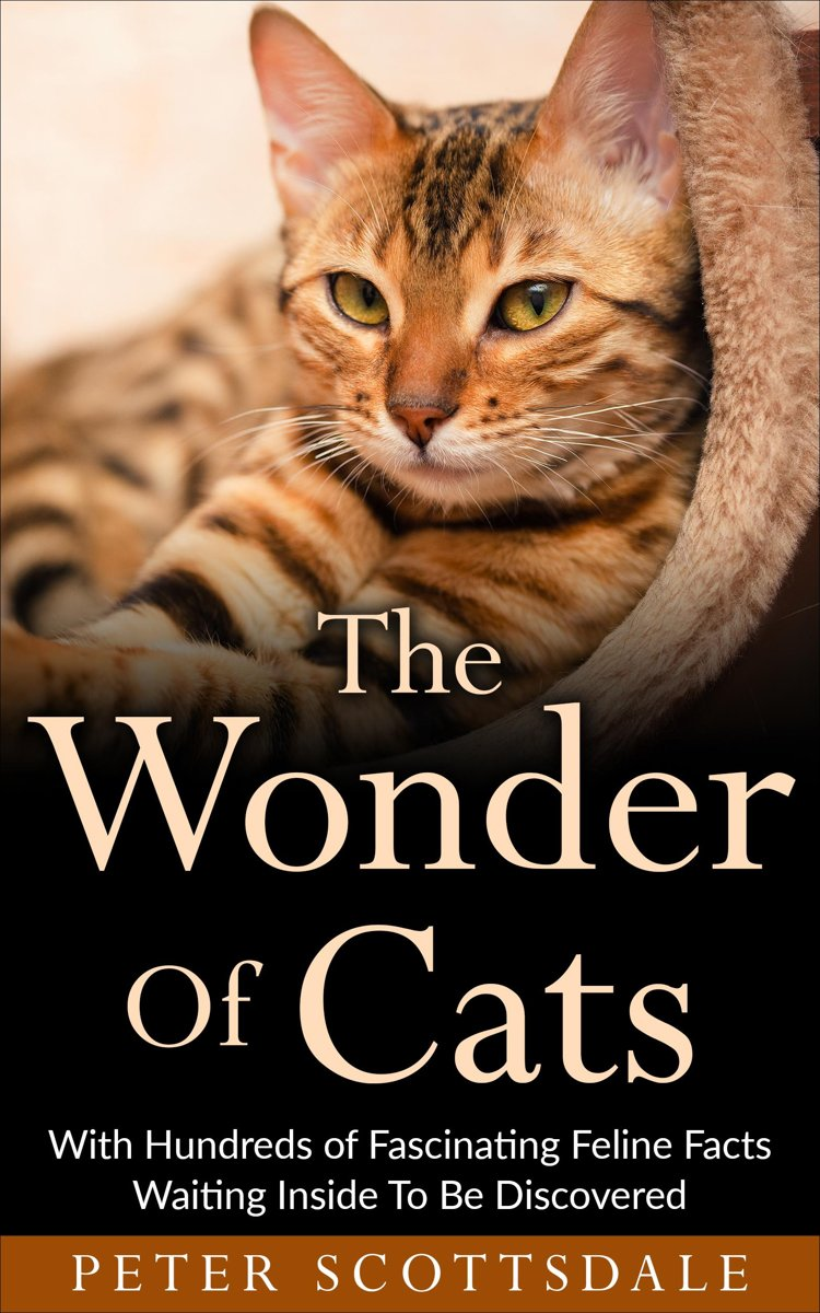 The Wonder Of Cats