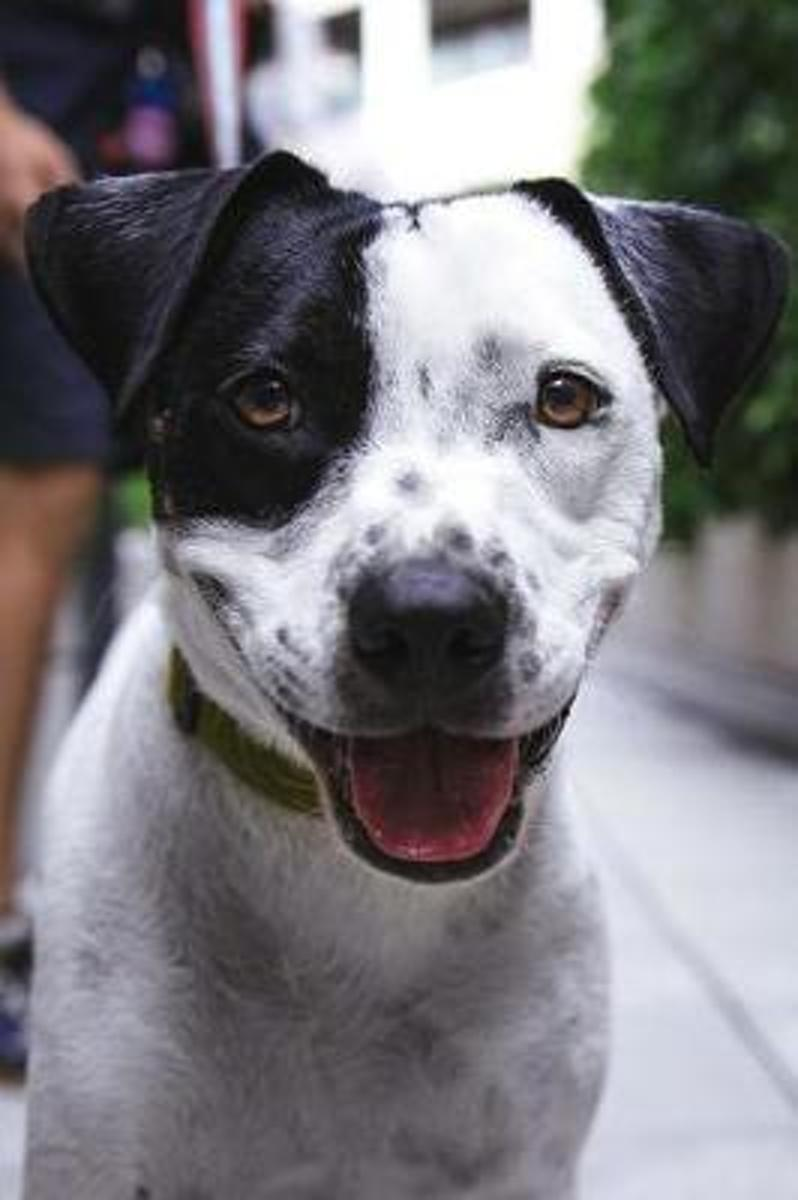 Who's a Good Boy? Adorable Black and White Dog Journal