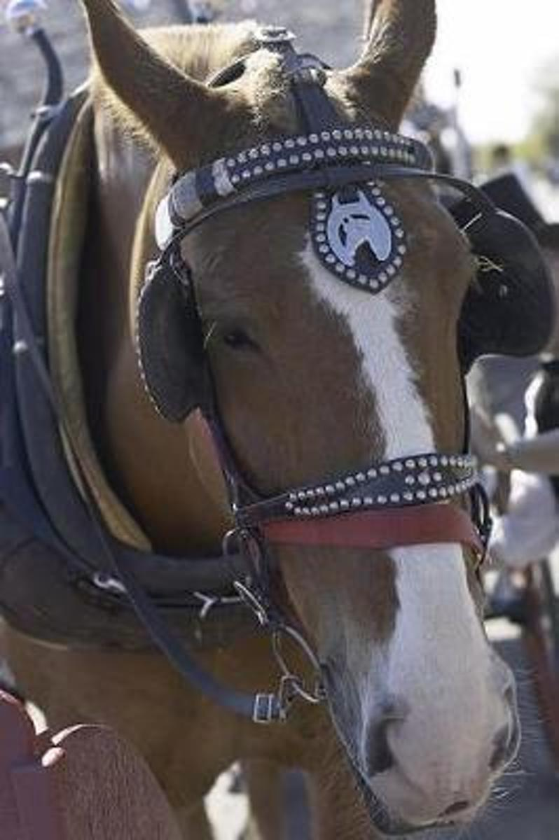 Equine Journal Carriage Horse