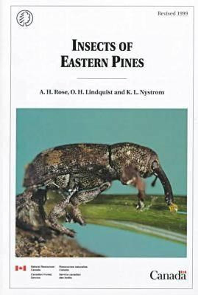 Insects of Eastern Pines