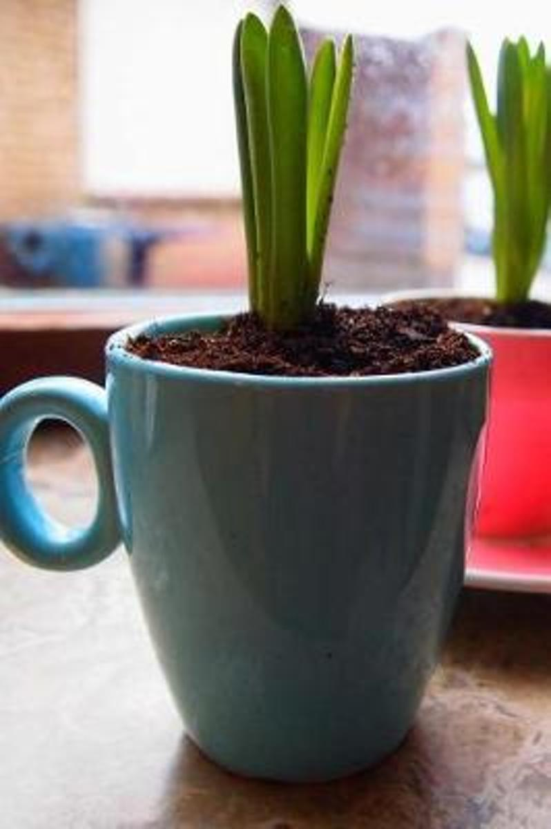 Flower Growing in a Coffee Cup Indoor Plant Journal