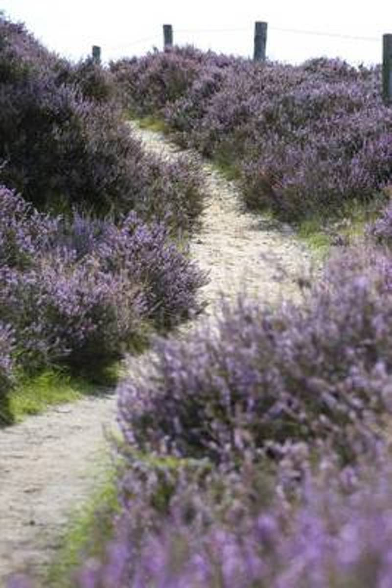 The Heather Path Journal