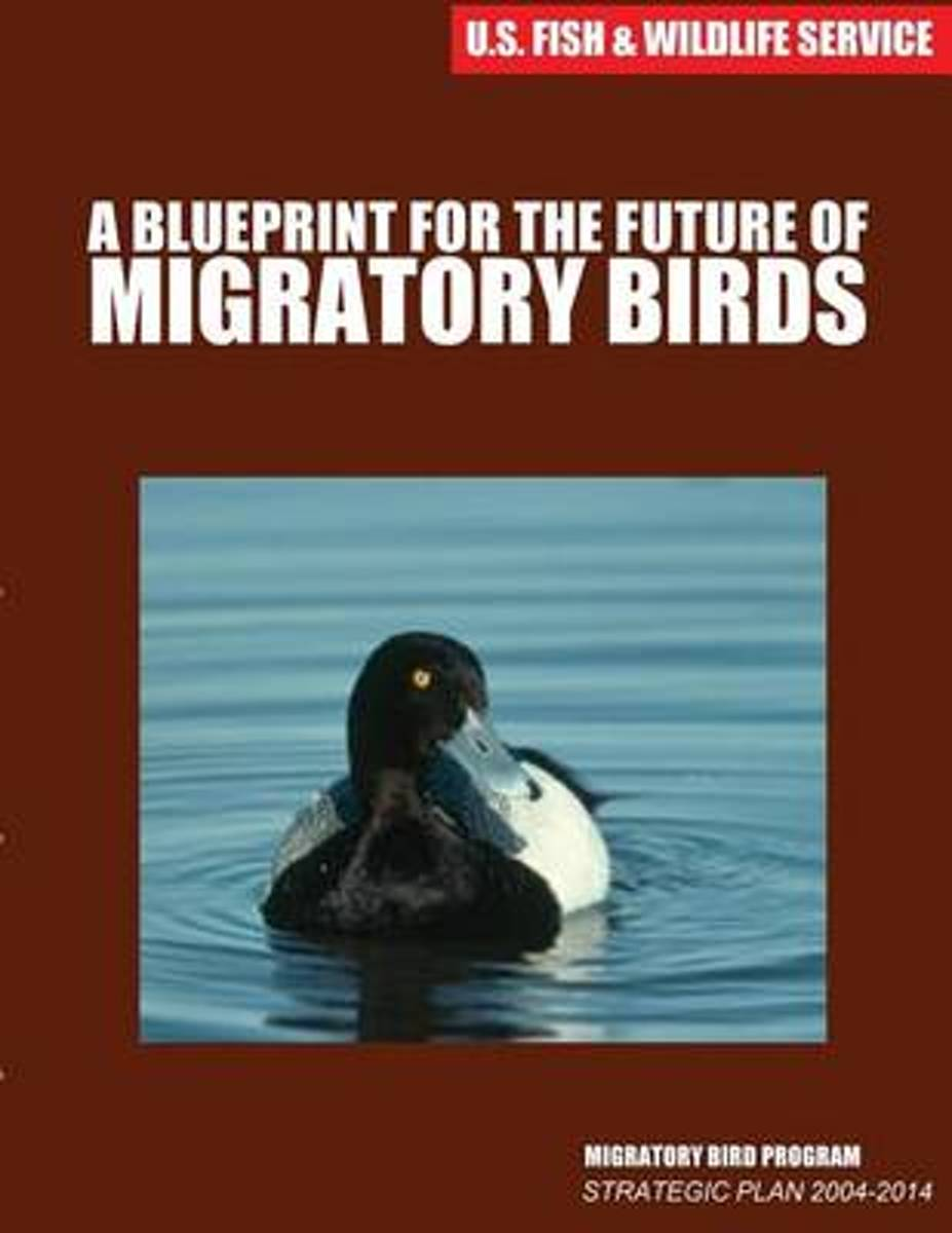 A Blueprint for the Future of Migratory Birds