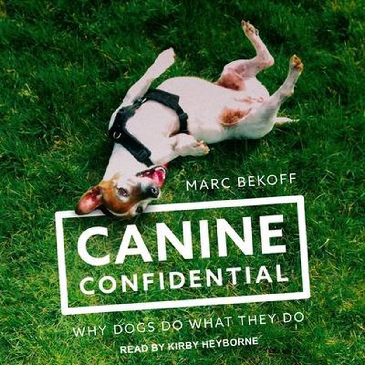 Canine Confidential Lib/E: Why Dogs Do What They Do