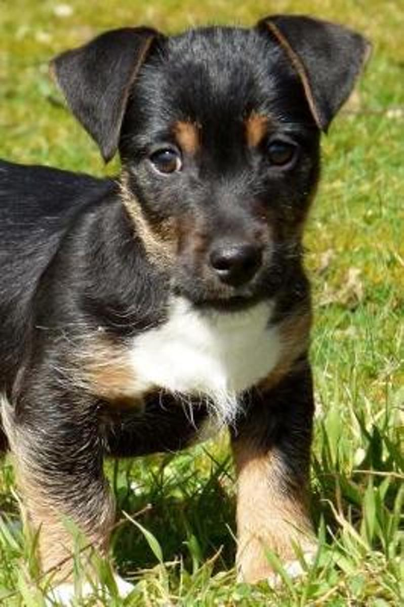 Simply Too Adorable Black and Tan Mixed Breed Puppy Dog Pet Journal