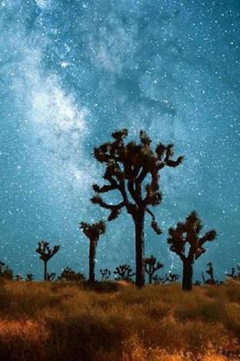 The Milky Way and Joshua Trees by Moonlight Starry Night Journal