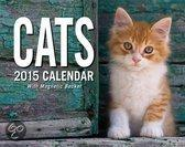 Cats Mini Day-To-Day Calendar