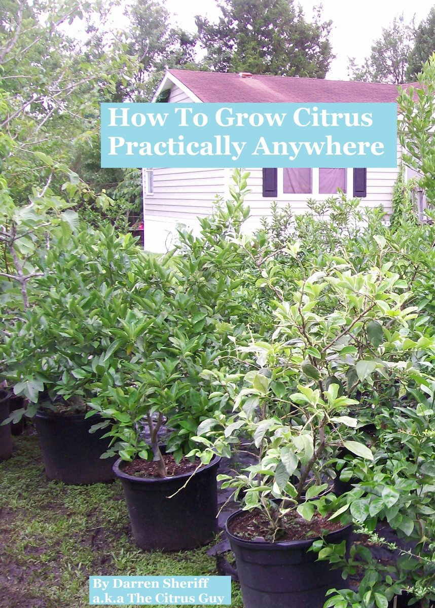 How To Grow Citrus Practically Anywhere