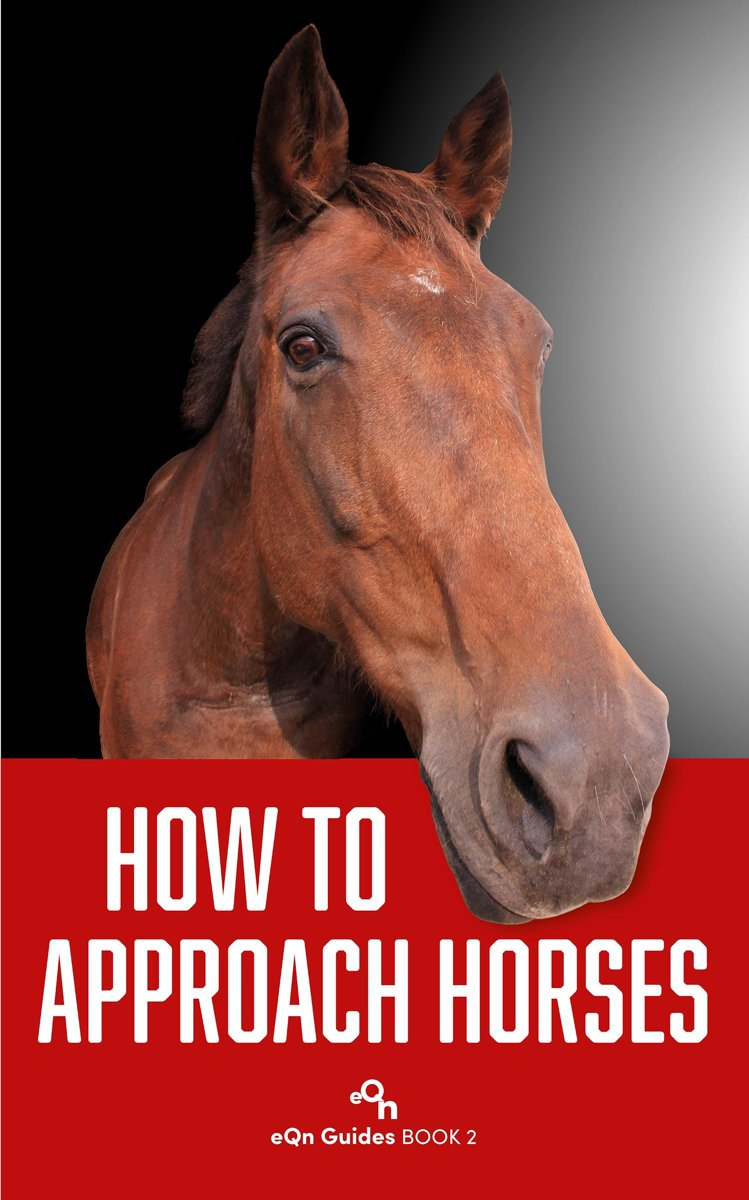 How to Approach Horses