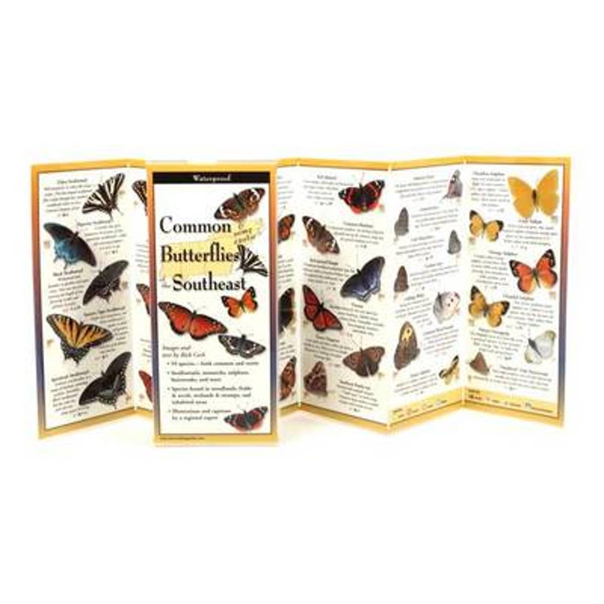 Common Butterflies of the Southeast