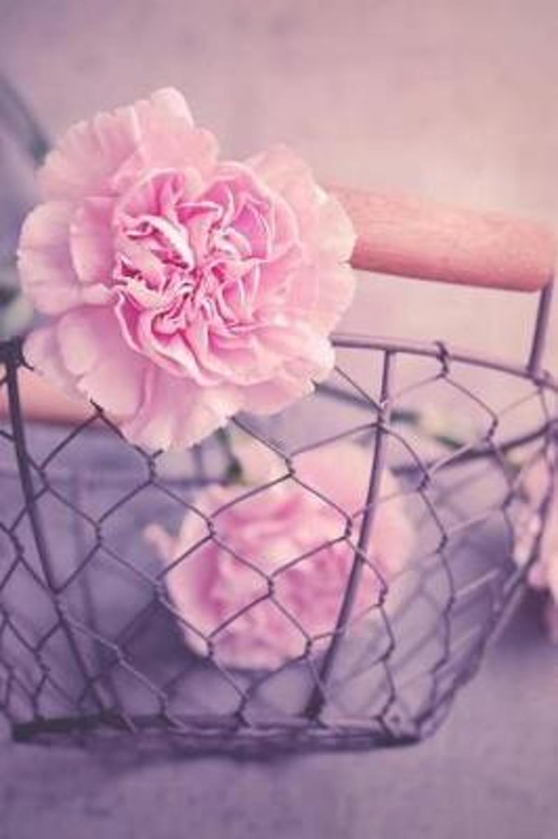 Pink Carnations in a Rustic Wire Basket Flower Journal