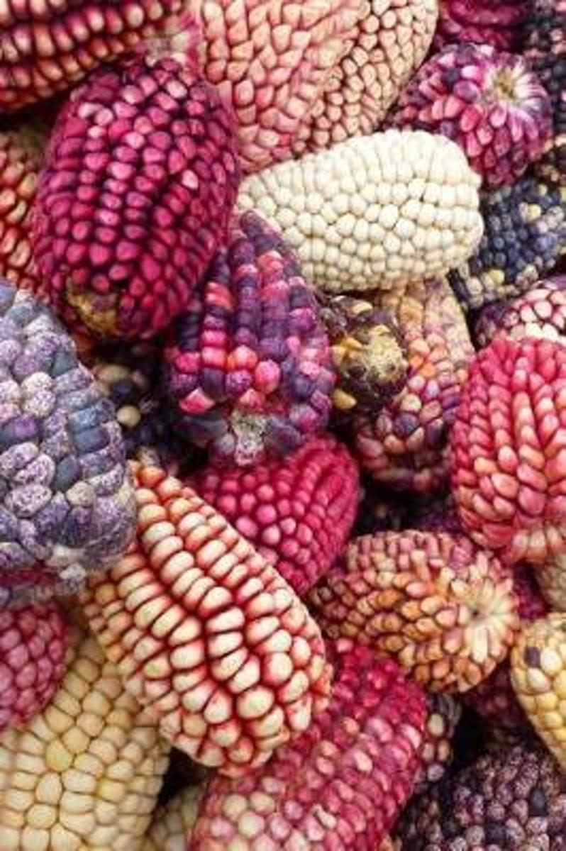 Bright and Colorful Maize Corn Harvest Journal