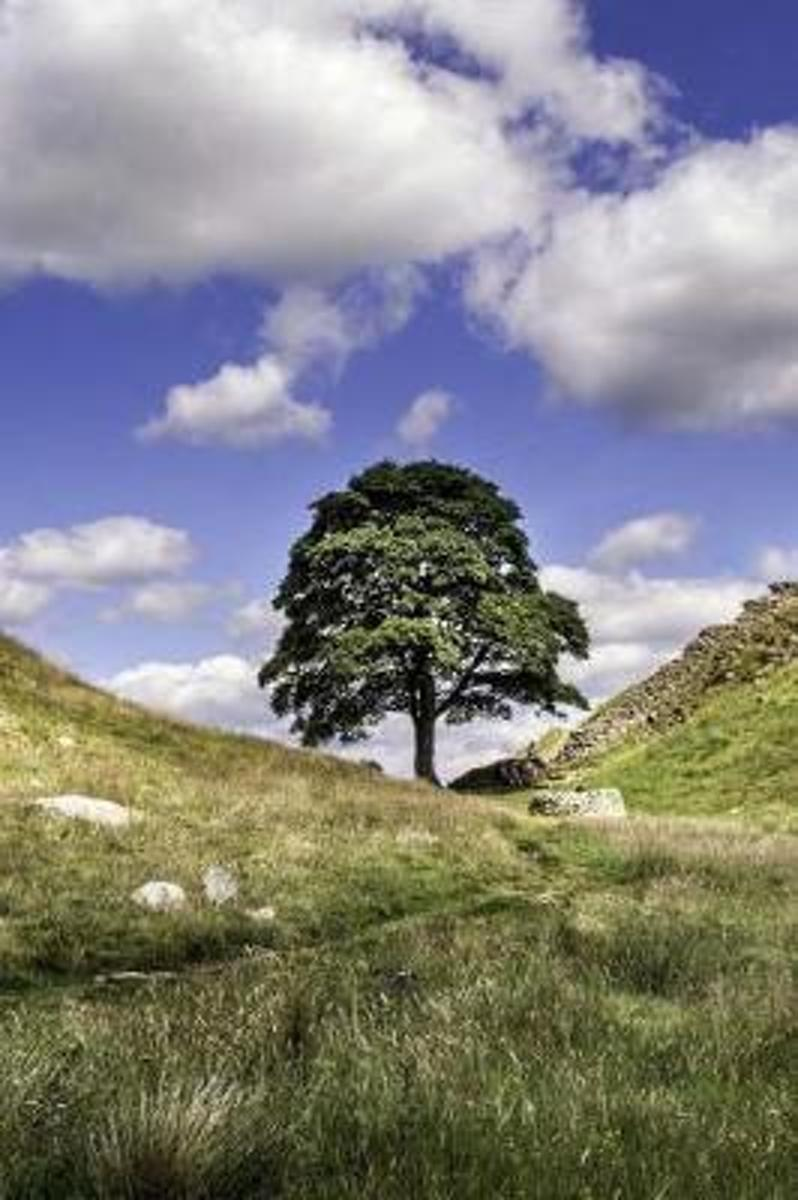 Sycamore Gap in Northumberland England Journal